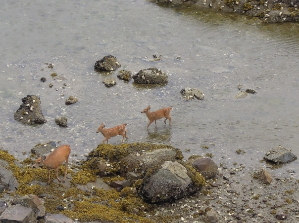 This young family are almost daily visitors as they make a pass from the forest down to the water's edge.